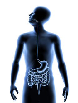 3D image of the human Digestive system inside the human body